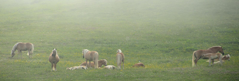 Pferde in einem Nebel lizenzfreie stockfotografie