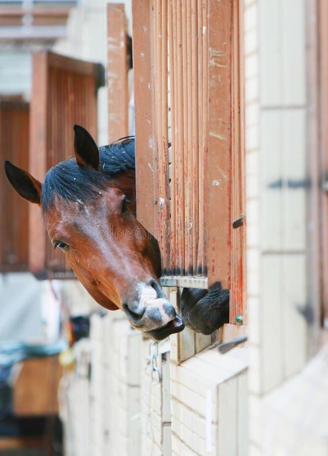 Pferde hinter Stäben stockfotos