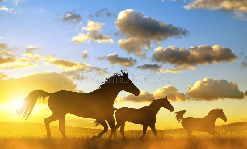 Pferde im Galopp bei Sonnenuntergang lizenzfreie stockfotos