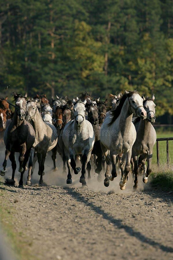 Pferde im Herbst stockfotografie
