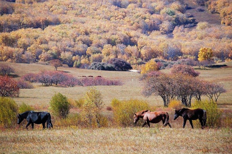 Pferde im Herbstgrasland lizenzfreie stockfotografie
