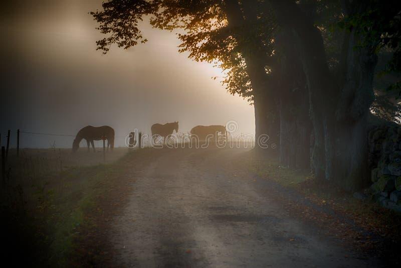 Pferde im Morgennebel lizenzfreies stockbild
