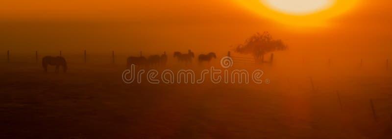 Pferde im Nebel stockfotos