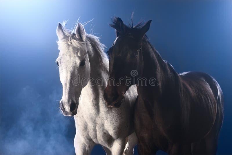 Pferde im Nebel stockfoto