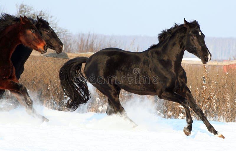pferde im schnee stockbild bild von sch n bloodstock. Black Bedroom Furniture Sets. Home Design Ideas
