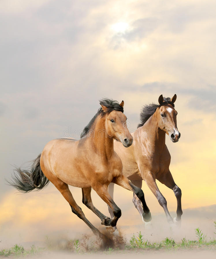 Pferde im Staub stockbild