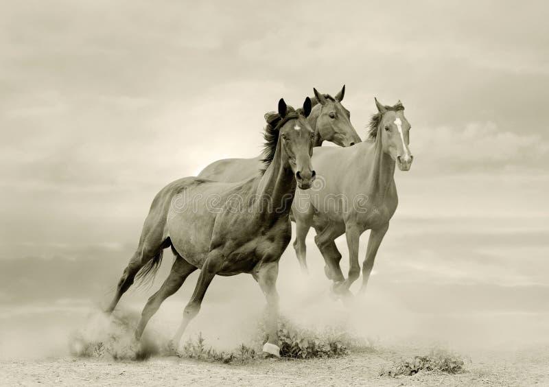 Pferde im Staub lizenzfreie stockfotos
