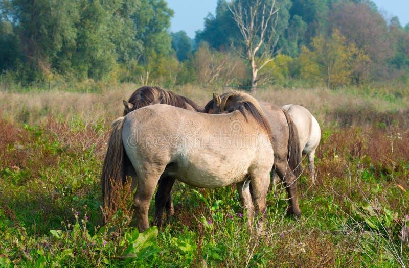 Pferde im Sumpfgebiet im Sommer lizenzfreie stockfotografie