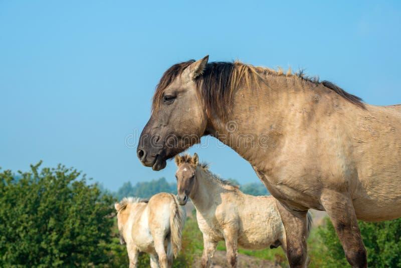 Pferde im Sumpfgebiet im Sommer lizenzfreies stockfoto