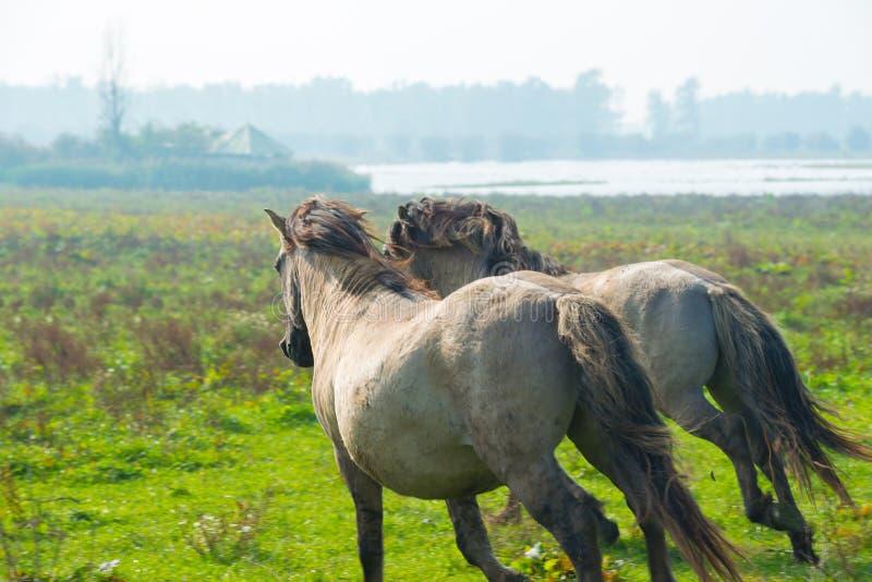 Pferde im Sumpfgebiet im Sommer lizenzfreie stockfotos