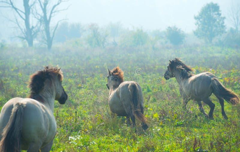 Pferde im Sumpfgebiet im Sommer stockbilder