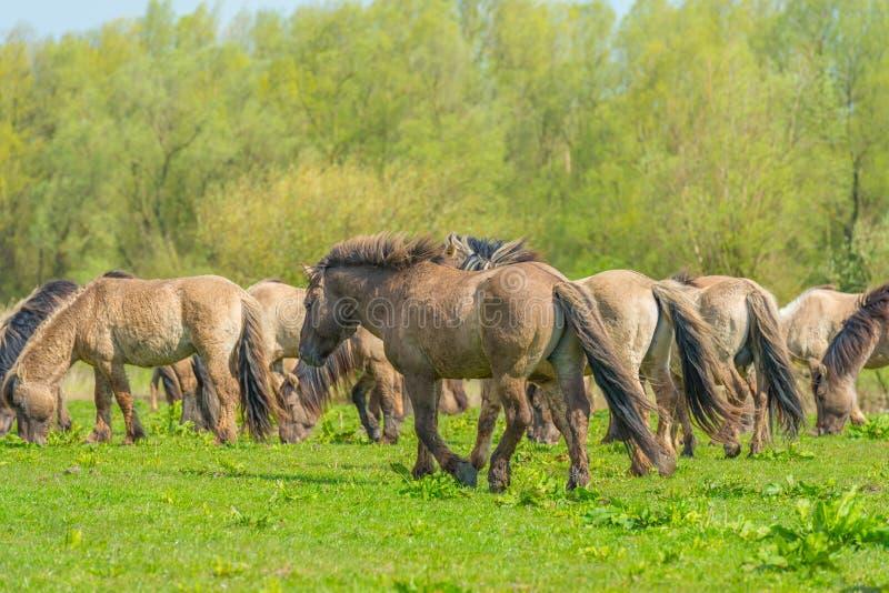 Pferde im Sumpfgebiet im Sonnenlicht lizenzfreies stockfoto