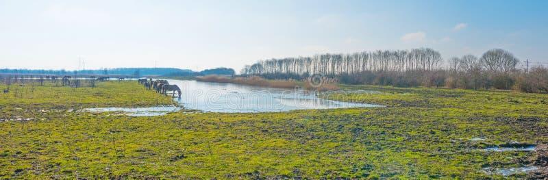 Pferde im Sumpfgebiet im Sonnenlicht stockfotografie