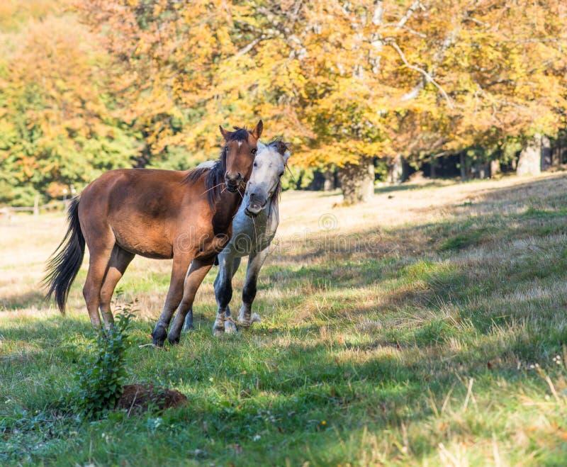 Pferde im Wald lizenzfreies stockfoto
