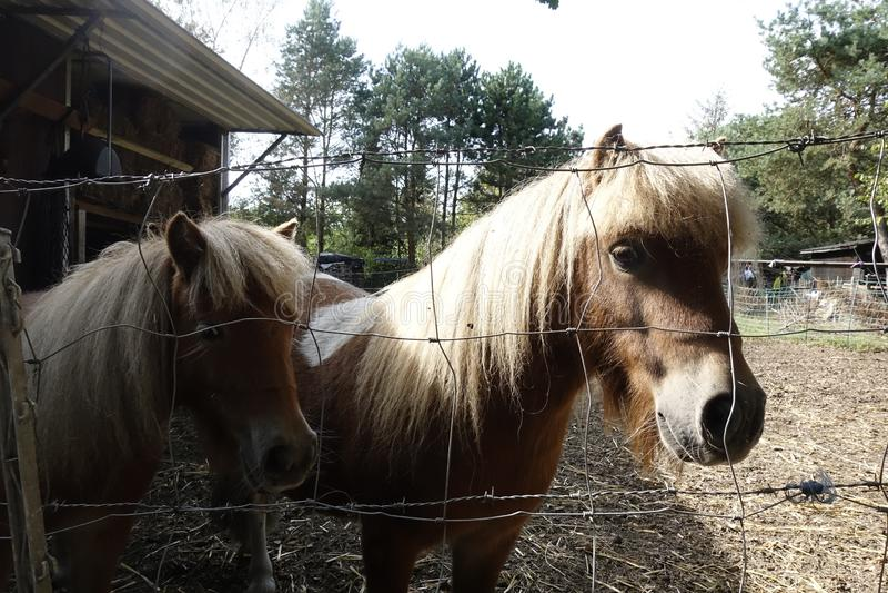 Pferde Otternhagener amarra fotos de archivo