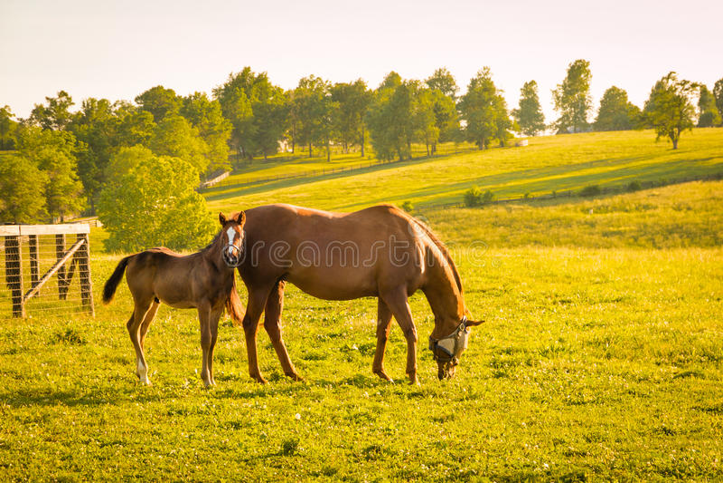 Pferde am Pferdebauernhof Ein sonniger Tag einer durchschnittlichen Zone von Russland lizenzfreie stockfotografie