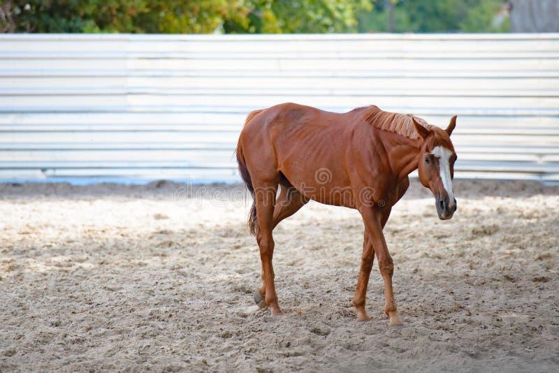 Pferde am Pferdebauernhof Landsommerlandschaft stockfotografie