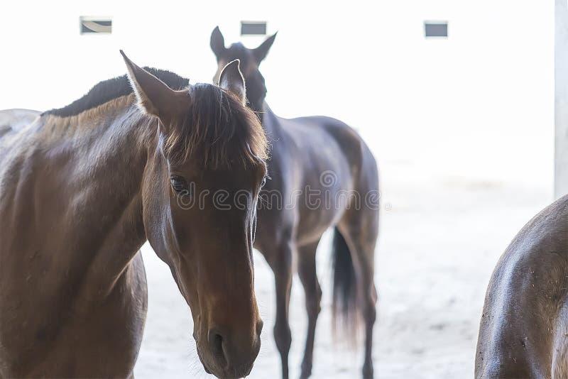 Pferde am Stall lizenzfreie stockfotos