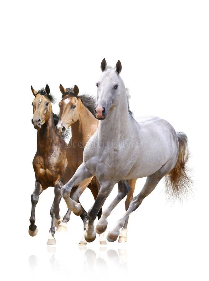 Pferde trennten lizenzfreie stockfotografie