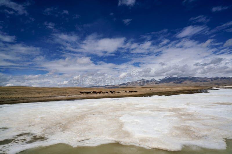 Pferde- und der weißen Wolkengefrorenes Fluss Gelbgras des blauen Himmels in Bayanbulak im Frühjahr lizenzfreies stockfoto