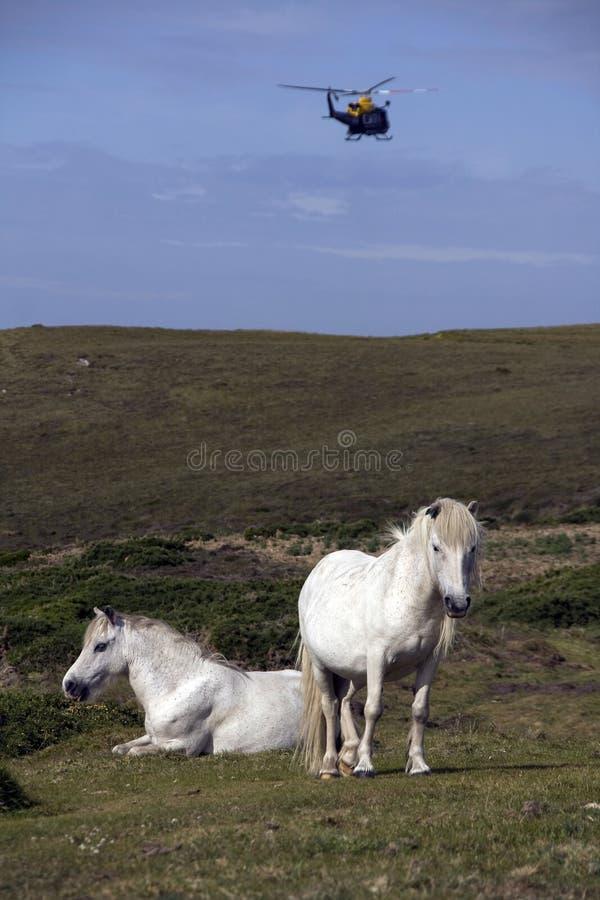 Pferde und Hubschrauber stockfoto