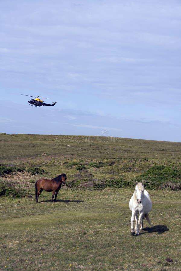 Pferde und Hubschrauber stockfotografie