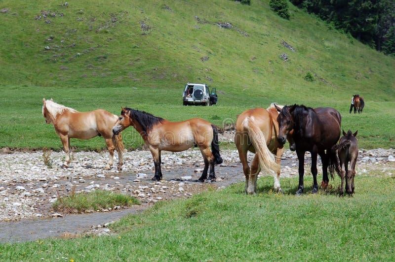 Pferde und Natur stockbild
