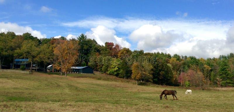 Pferde und Scheune auf Abhang lizenzfreie stockfotos