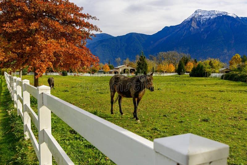 Pferde und weißer Zaun auf einer Ranch im Britisch-Columbia, Canad stockfoto