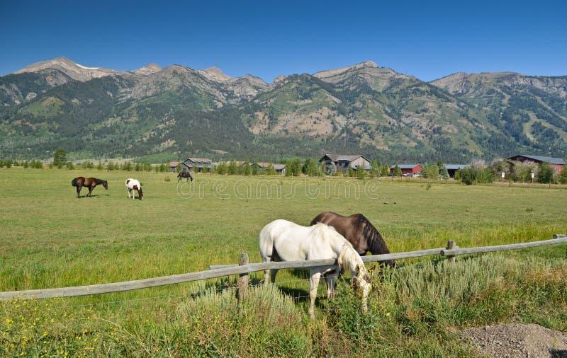 Pferde in Wyoming lizenzfreie stockfotografie