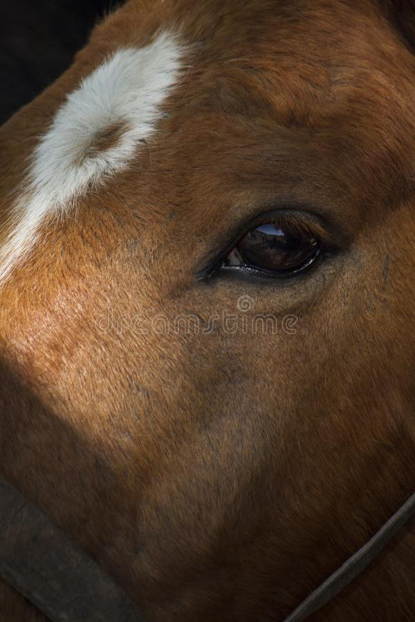 Pferdeartiger Blick lizenzfreie stockbilder