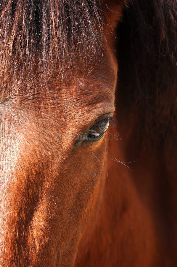 Pferdeartiges Auge lizenzfreie stockfotos