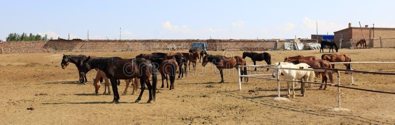 Pferdebauernhof, luftgetrockneter Ziegelstein rgb stockfoto