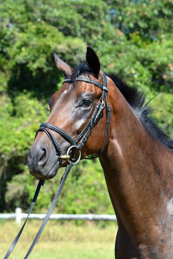 Pferdebauernhof, Nizza saubere Pferdeställe lizenzfreie stockfotos