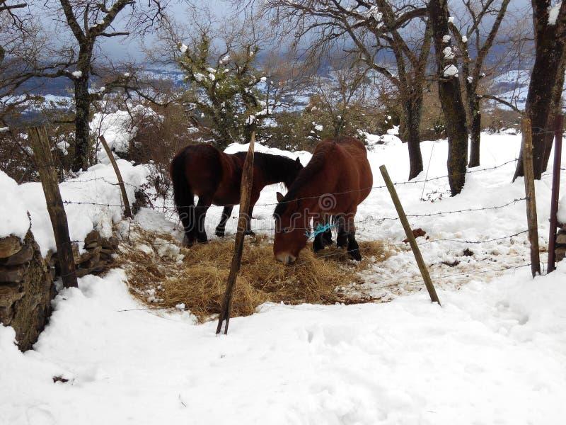 Pferdeessen stockfotografie