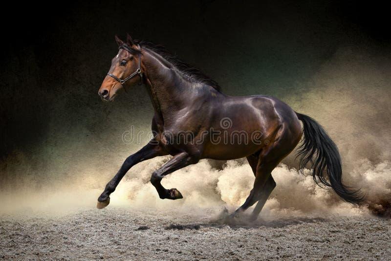 Pferdegalopp in der Wüste stockbilder