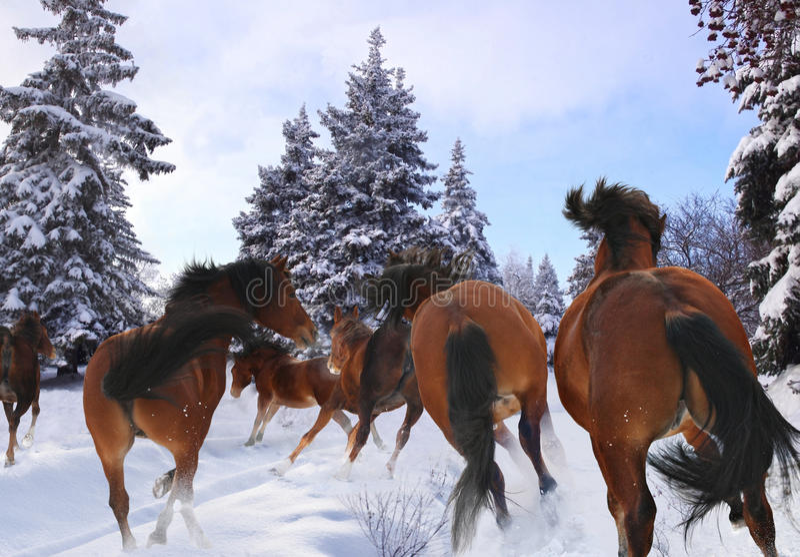 Pferdegalopp im Winter lizenzfreies stockfoto