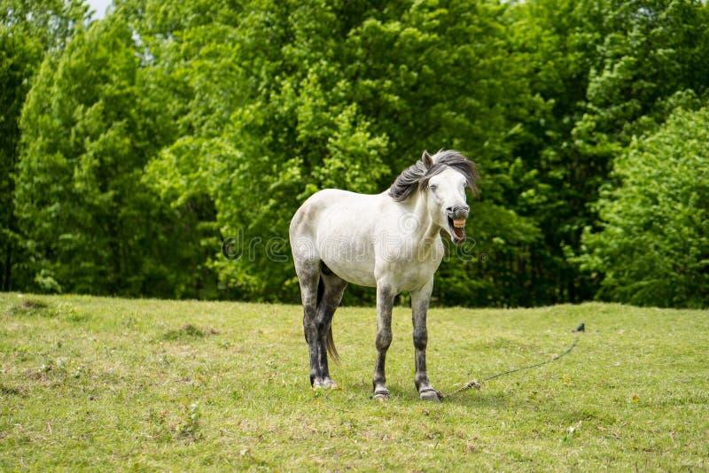 Pferdegegähne lizenzfreies stockfoto