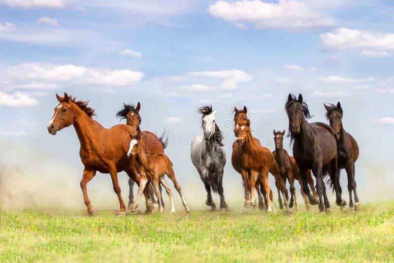 Pferdeherde gelaufen in Staub lizenzfreie stockfotos