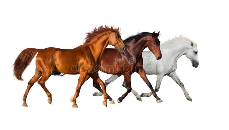 Pferdeherde lokalisiert auf Weiß lizenzfreie stockfotografie