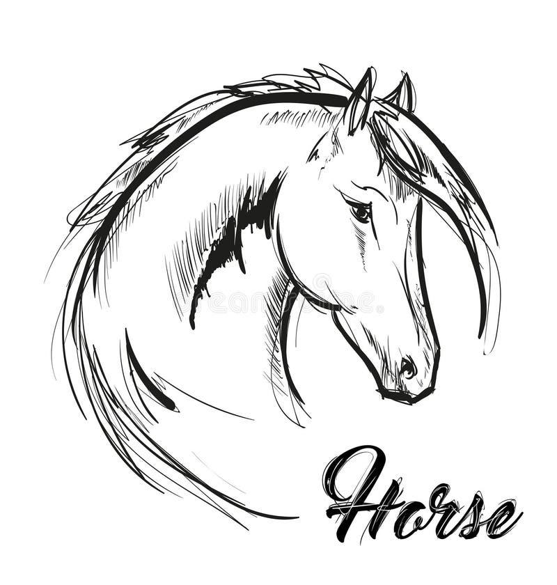 Pferdekopfprofil-Skizzenvektorgrafik Hand gezeichnete Abbildung stock abbildung