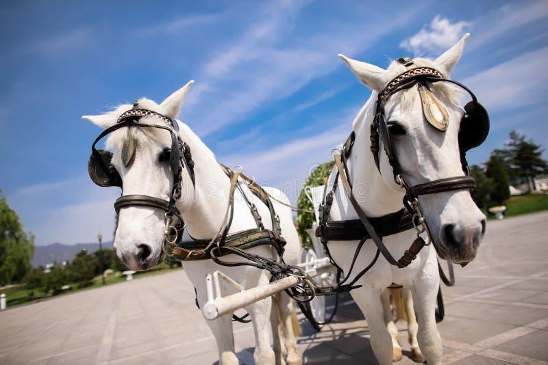 Pferdekutsche stockfotografie