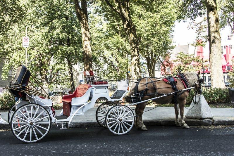 Pferdekutsche Québec-Stadt Kanada bereist durch historischen Bezirk, der UNESCO-Welterbestätte ist lizenzfreies stockfoto
