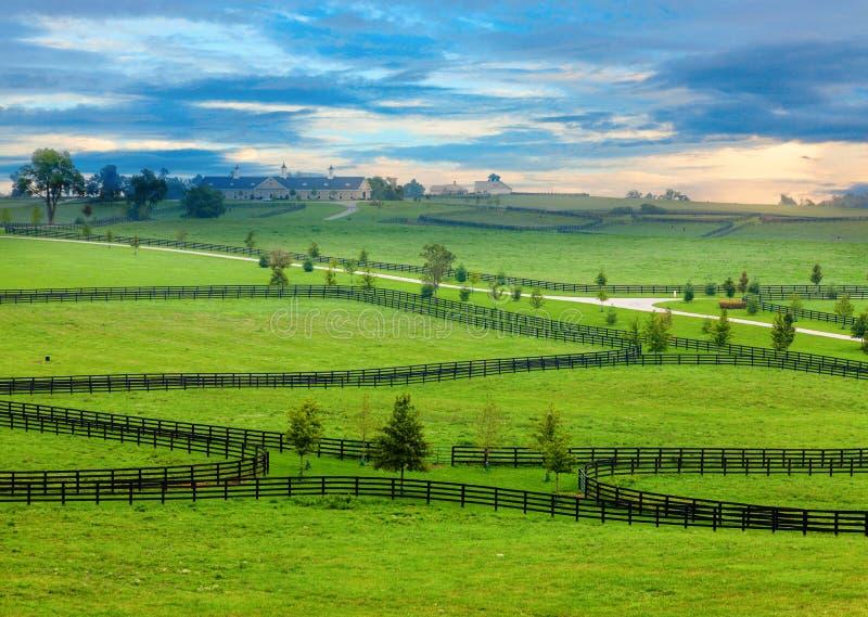 Pferdeland stockfotografie