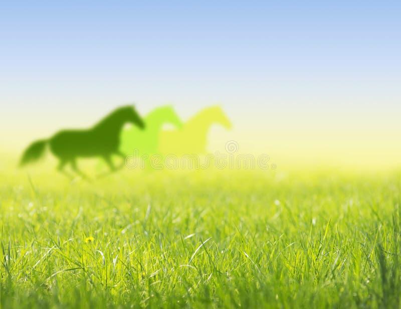 Pferdelauf auf Frühlingsfeldschattenbild lizenzfreie stockfotografie