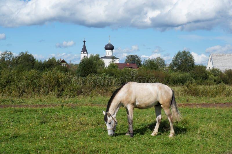 Pferdemähne, die auf dem Feld weiden lässt lizenzfreies stockfoto
