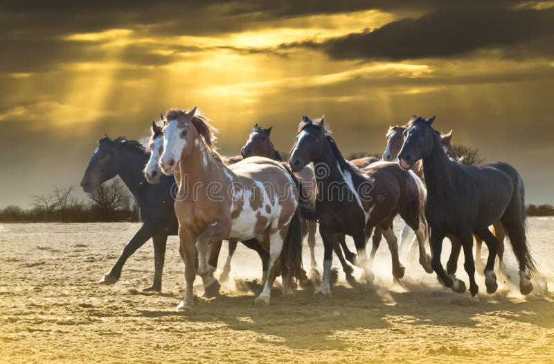 Pferden-Ansturm gegen schönen Himmel lizenzfreie stockbilder