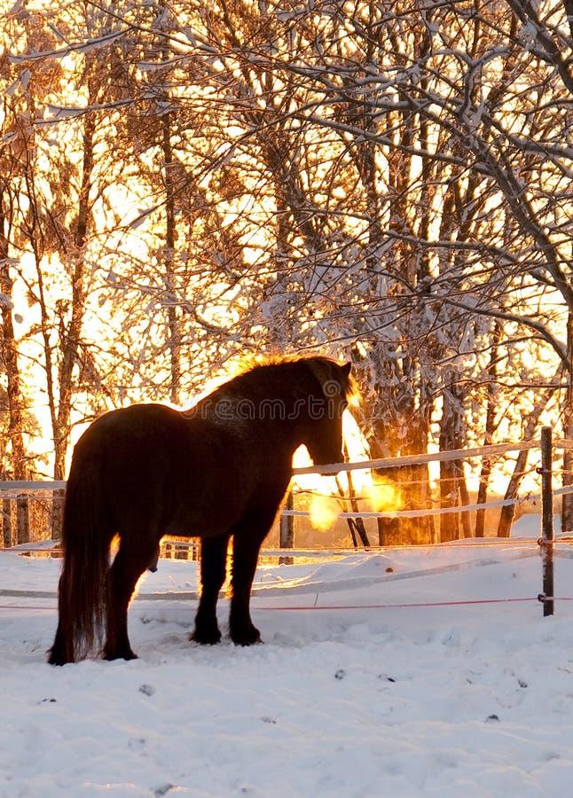 Pferden-Schattenbild stockfoto