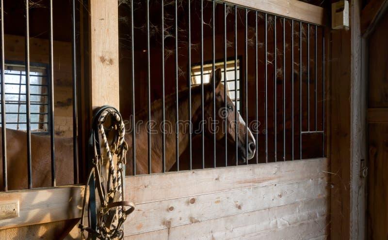 Pferden-Stall lizenzfreie stockfotografie