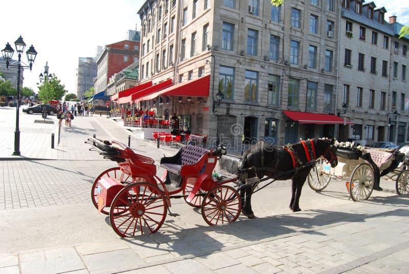 Pferden-Wagen in Montreal lizenzfreie stockfotos